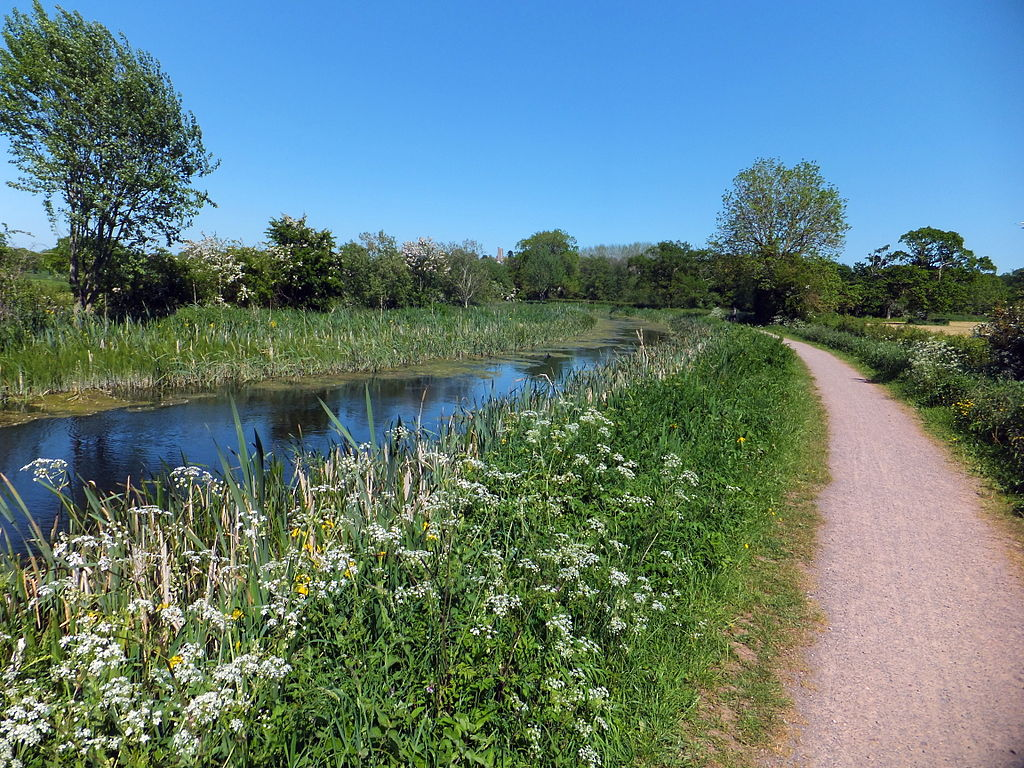 Photo of flowers and grassy banks alongside the Grand Western Canal and tow path