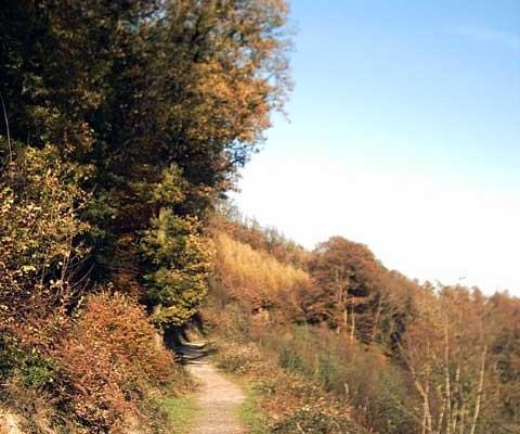 Photo of a path through woodland and heathland at Abbeyford Woods