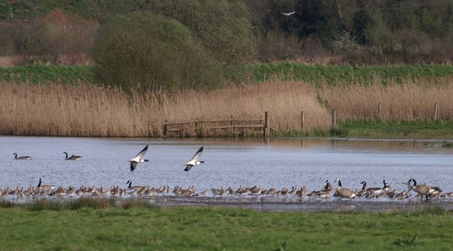 Photo of geese on a lake in marshes