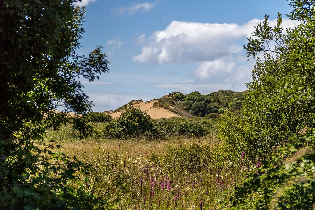 Photo across a dune slack to sand dunes in the background