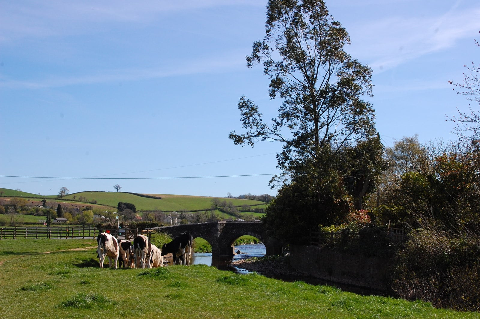 Photo of fields alongside a river with cows and a bridge in the background