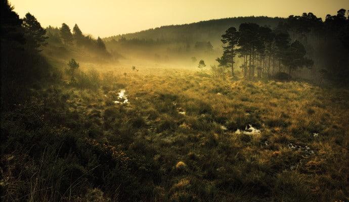 Photo of mist over heathland