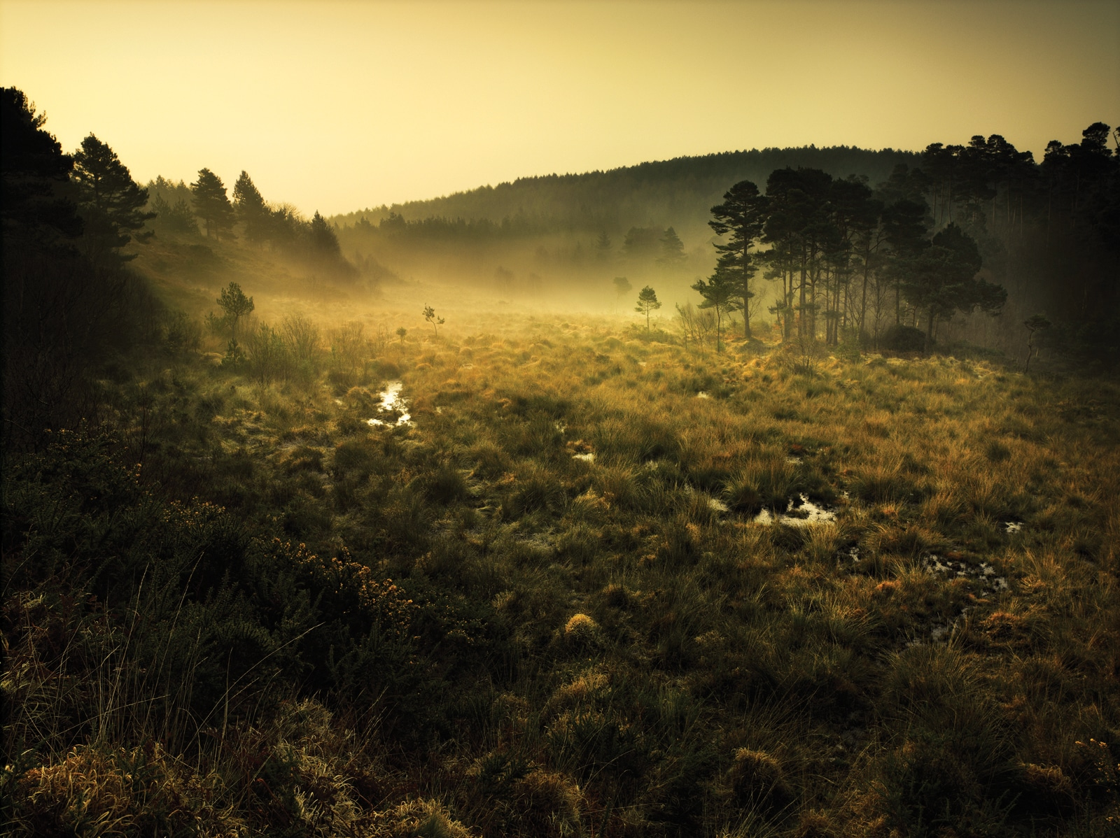 (C) Pebblebed Heaths Conservation Trust