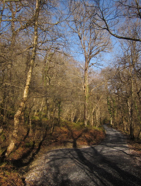 Photo of a trail through woodland at Yarner Woods