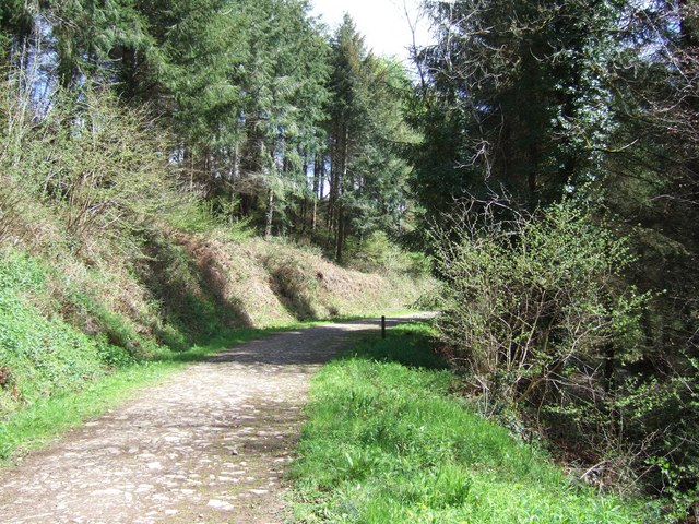Photo of a track through woodland at Eggesford Forest