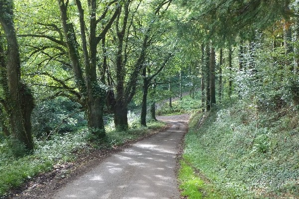 Photo of a quiet lane between trees on the Exe Valley Way