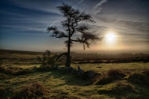 Photo of a tree at Haytor Quarry with low sun behind