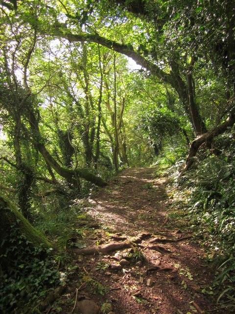 Photo of a trail through woodland