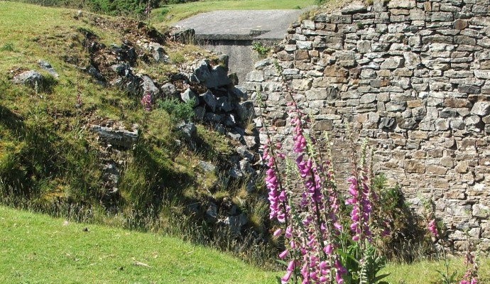 Photo of foxgloves in front of an old stone wall with the viaduct in the background at Meldon
