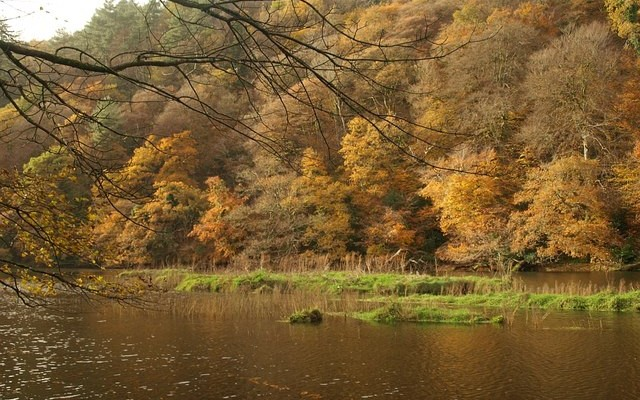 Photo of a view across the River Tamar to woodlands in Autumn