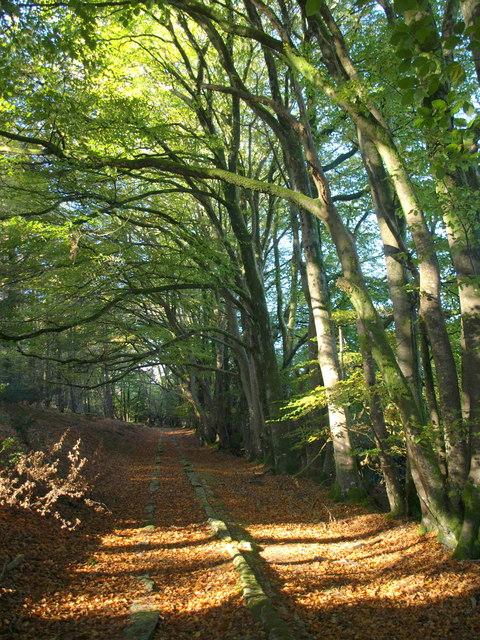 Copyright Derek Harper - geograph.org.uk