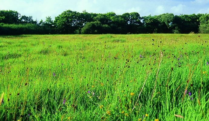 Photo of Clum grassland meadow at Dunsdon