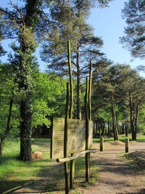 Photo of trails at Haldon Forest Park