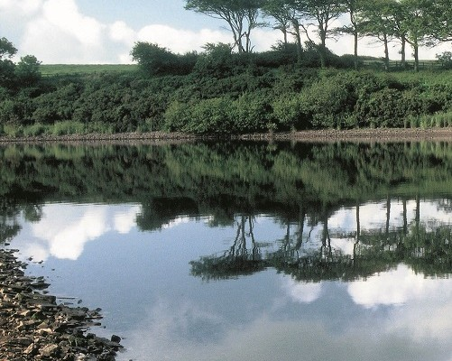 Photo across the river Tamar ro fields and woodland
