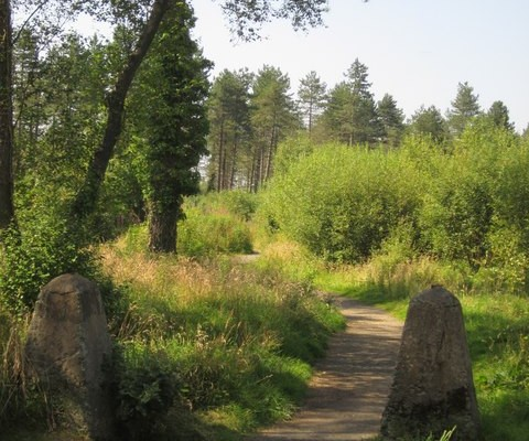 Photo of two stones marking the edge of a path through woodland and scrub at Haldon Forest Park