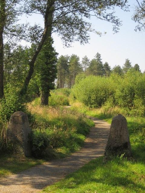 Haldon Forest Park by Derek Harper