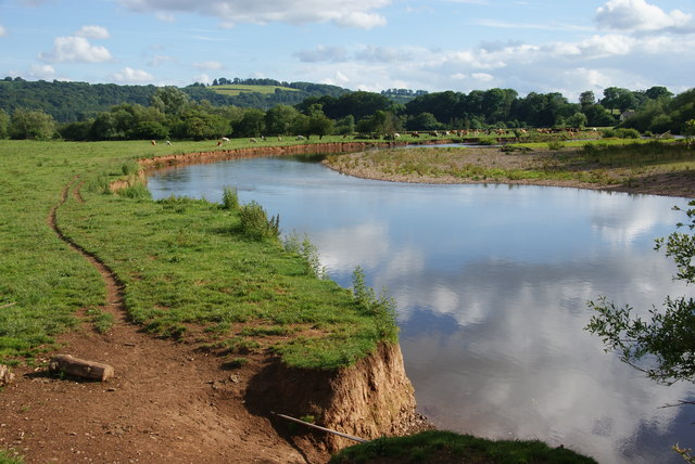 Photo of the river Exe through fields of cows at Brampford Speke