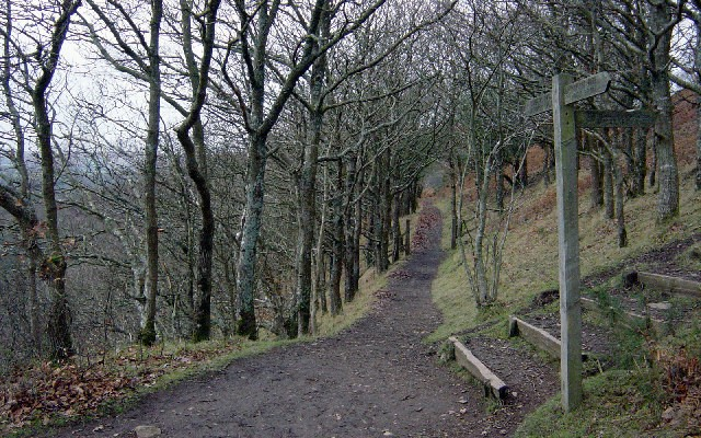 Photo of a trail through open woodland on the side of a steep slope above the Teign Gorge
