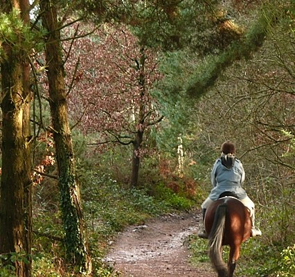 Photo of a horse rider on a trail through woodlands at East Budleigh Common