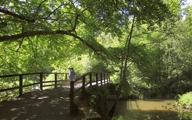 Photo of a bridge in woodland on the Stover Heritage Trail