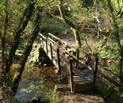 Photo of a wooden bridge over a small stream at Belstone Cleave