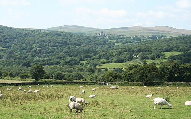 Photo of sheep in fields in the foreground and a a wooded valley