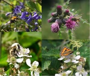 Pollinators-collage