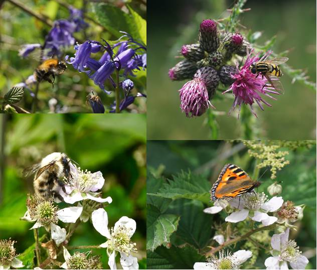 Photo montage of four photos showing pollinators on various wildflowers