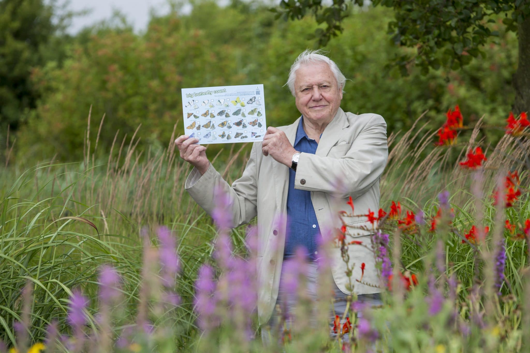 Sir David Attenborough launches the Big Butterfly Count 2015, at London Wetland Centre, on 17 July 2015.