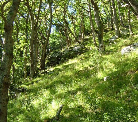 Photo of a sunny woodland scene at Wester Wood in the East Lyn valley near Lynmouth