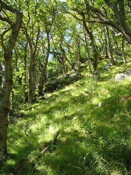 Wester Wood near Lynmouth - Copyright Derek Harper