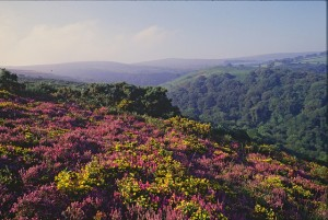 Horner Holnicote Copyright Natural England Peter Wakely