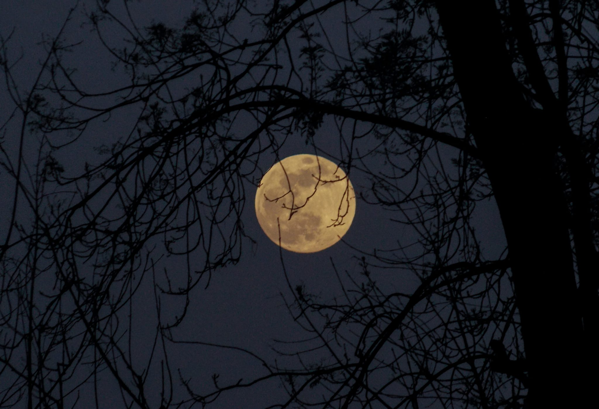 Photo of the moon through tree branches